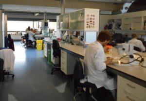 MSB Lab_Chanchal Cabrera