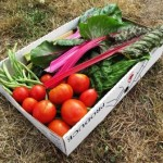 Rainbow Veggies box