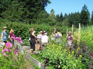 Herb Camp: Clinical Phytotherapy Summer Camp @ Innisfree Farm | Courtenay | British Columbia | Canada