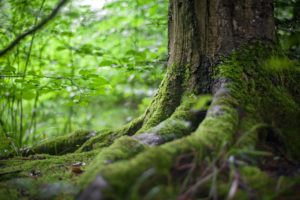Shinrin Yoku - Forest Bathing therapy